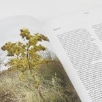 Het voedselbos – spread