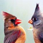 Stroomberg – VERSUS, kaart 'vogels' – Nederlands Letterenfonds, Goethe Institut